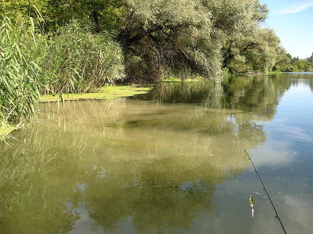 Загрязнение реки уменьшает шансы спиннингиста на богатый улов.