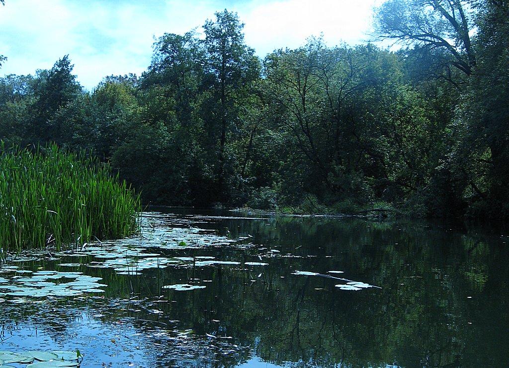 Рыбалка выше впадения реки Уды в Северский Донец.