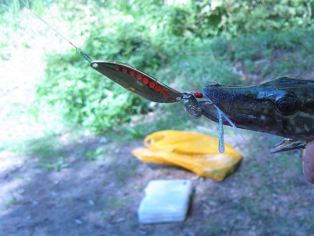 Ловля на колебалку с применением рывковой проводки.