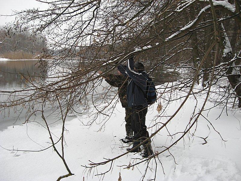 Снятие воблера Kingfisher Ukabu с дерева после неудачного заброса спиннингом