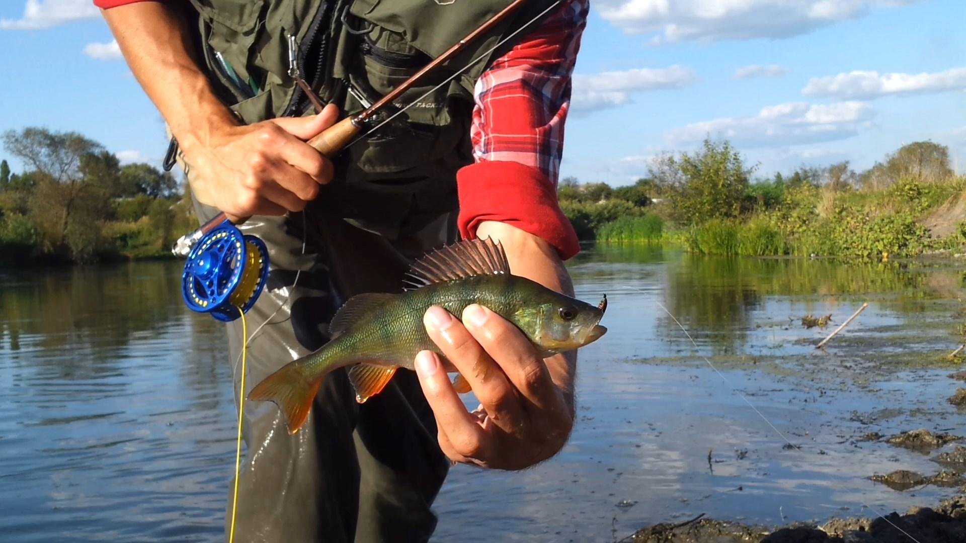 ловля рыбы на нимфу видео